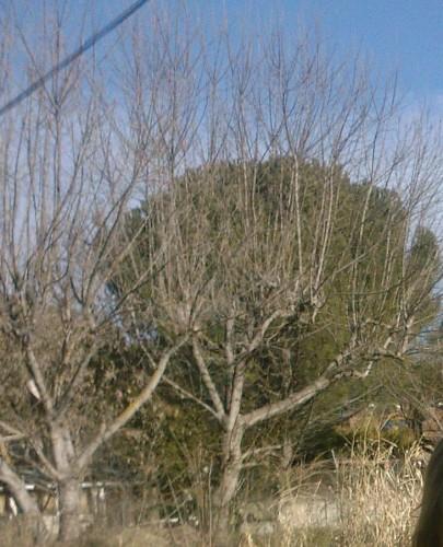 les deux arbres.jpg