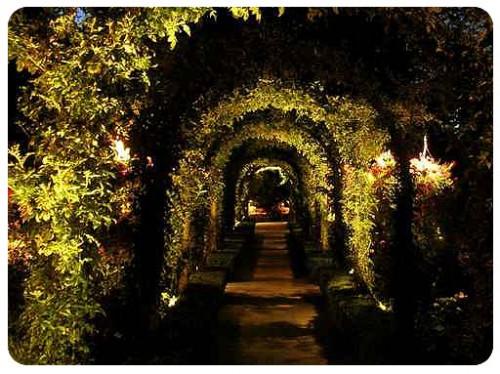 jardin de nuit.jpg