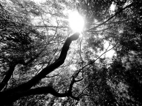 grands arbres.jpg